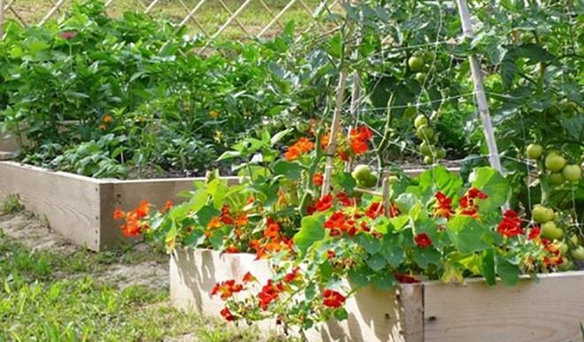 घर में बनाएं किचन गार्डन, उगाएं सब्जियां.