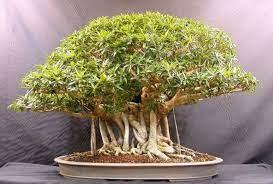 इस पौधे की करें खेती, आराम से होगी लाखों की कमाई