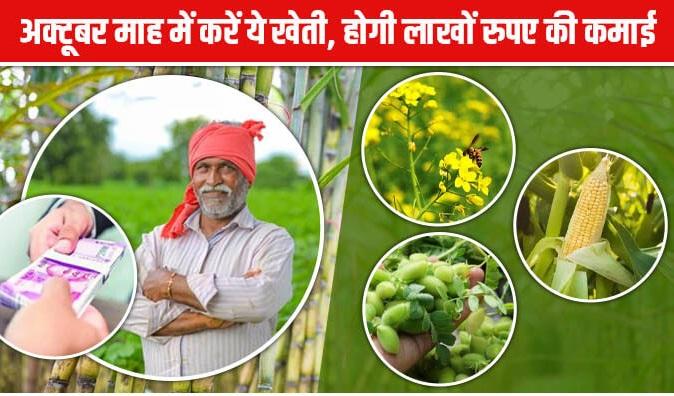 अक्टूबर माह में करें ये खेती, होगी लाखों रुपए की कमाई